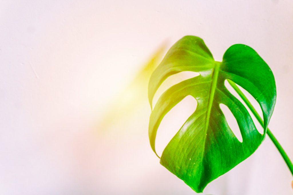 Зеленый лист на белом фоне символизирует вечнозеленый контент, о котором мы рассказываем в статье